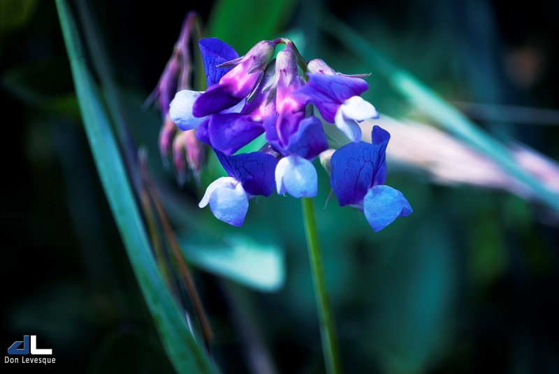 The Beauty of Flowers - part 2b
