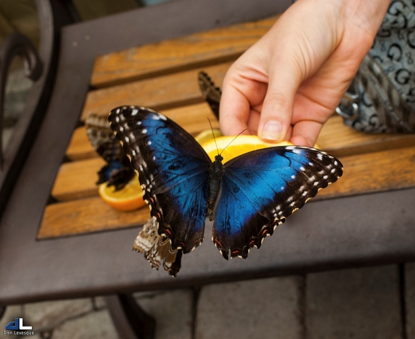 Butterfly Moments...hand fed