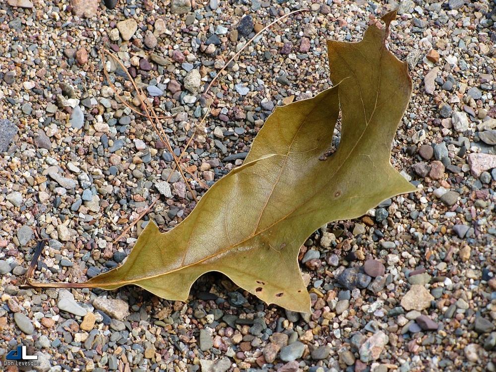 Leaf on a Beach