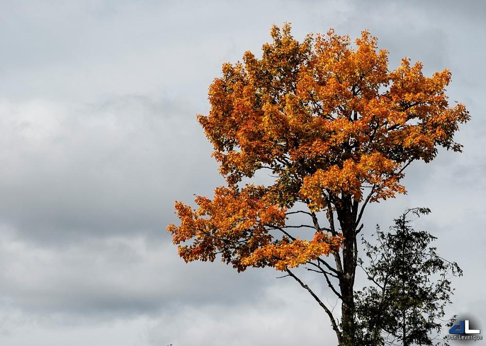 Autumn Colours II
