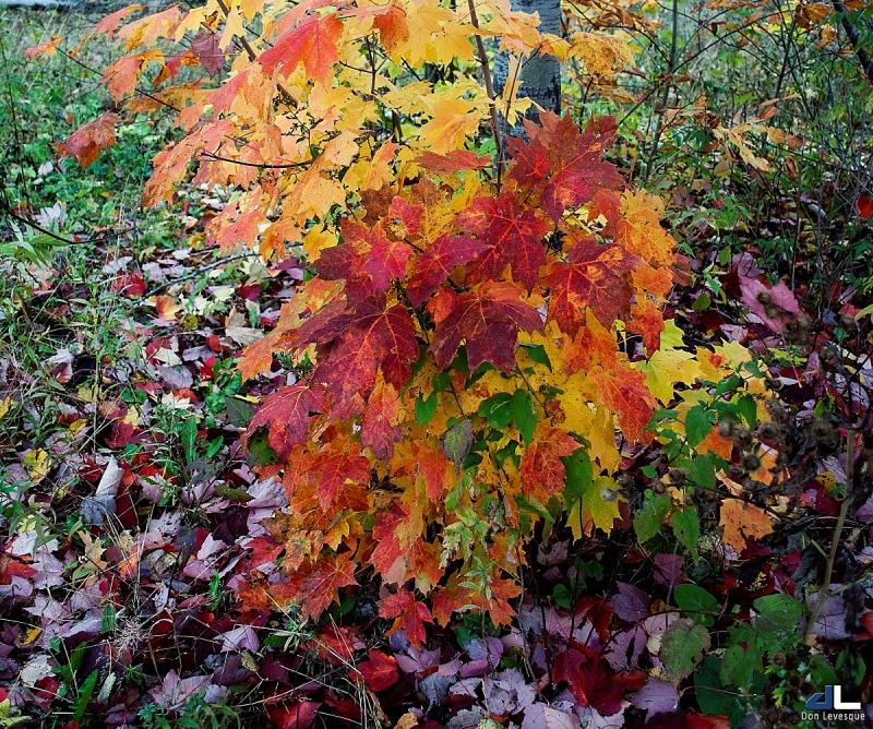 Autumn Colours III