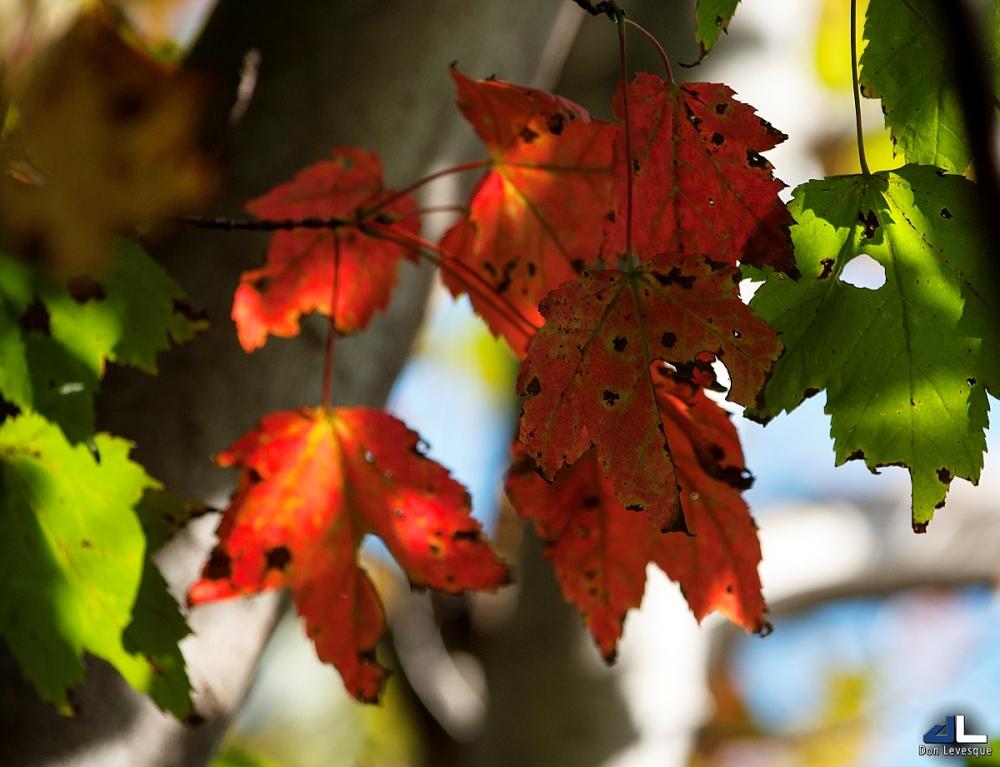 Autumn Colours VI