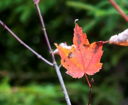Autumn Colours VII