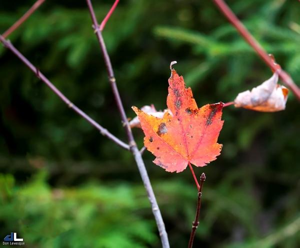 Autumn Colours VII