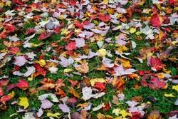 Autumn Colours IX