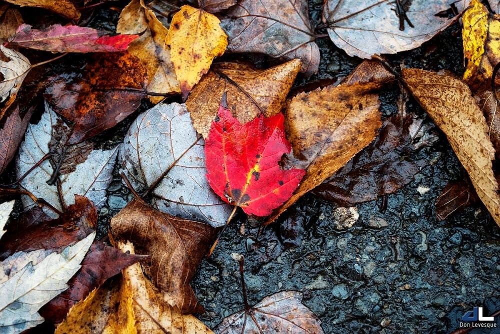 Autumn Colours XI