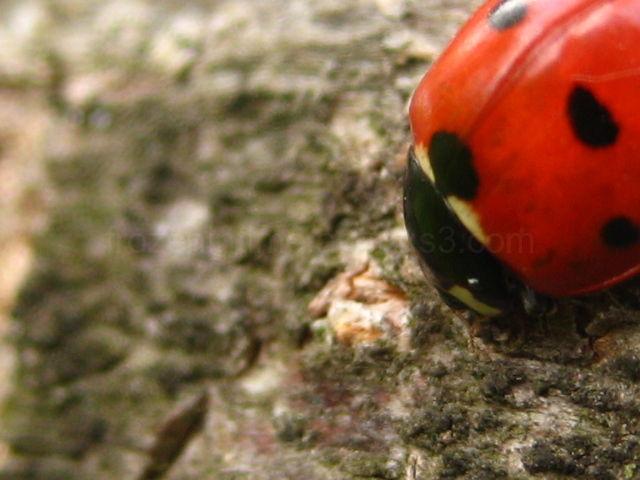 ladybug on tree