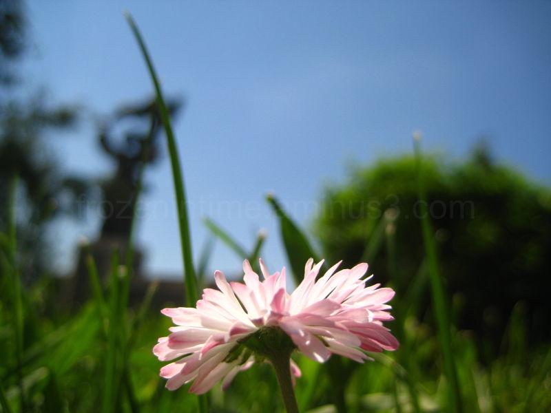 pink blooming flower