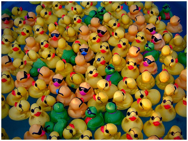 rubber duckies in captivity