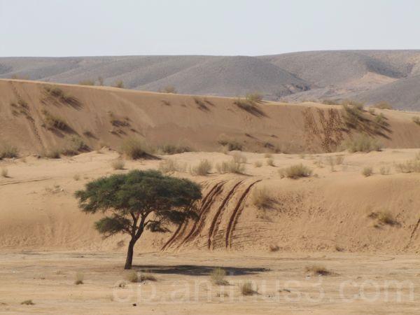 Wadi Araba 2 - Jordan