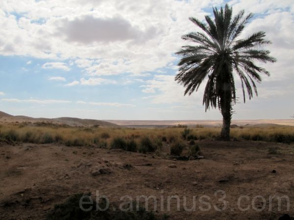 Wadi Araba 3 - Jordan