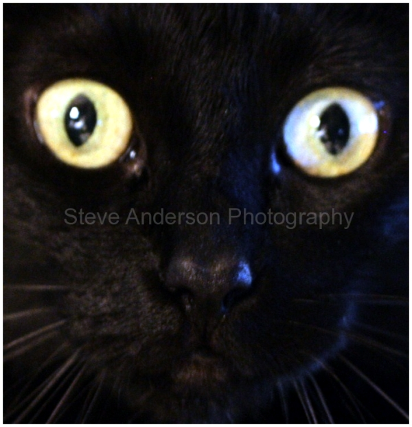 My Cat Onyx