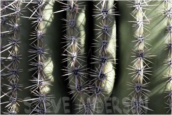 Macro of a Cactus