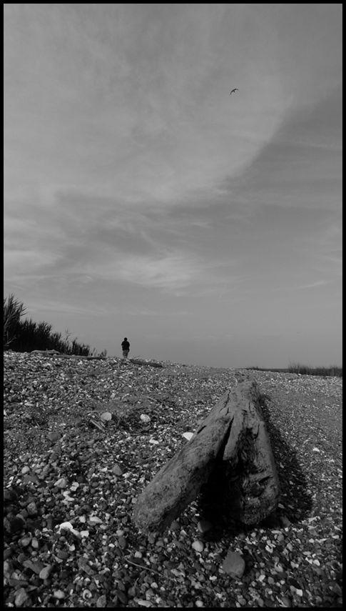 beach, branch, bird, sky, person, sand, life, spac