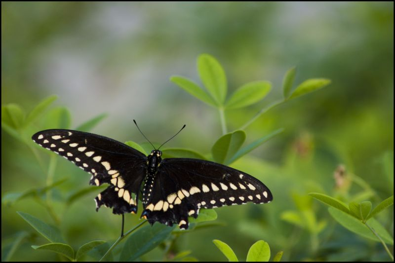 butterfly, Plants, Leafs, Nature, Beauty, wildlife