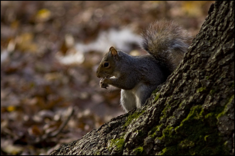 Eat, Eating, squirrel, nature, Life, Tree, Grass,