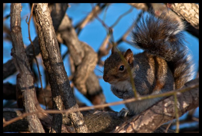 Sneaky, Squirrel, tree, eating, nature, climbing,