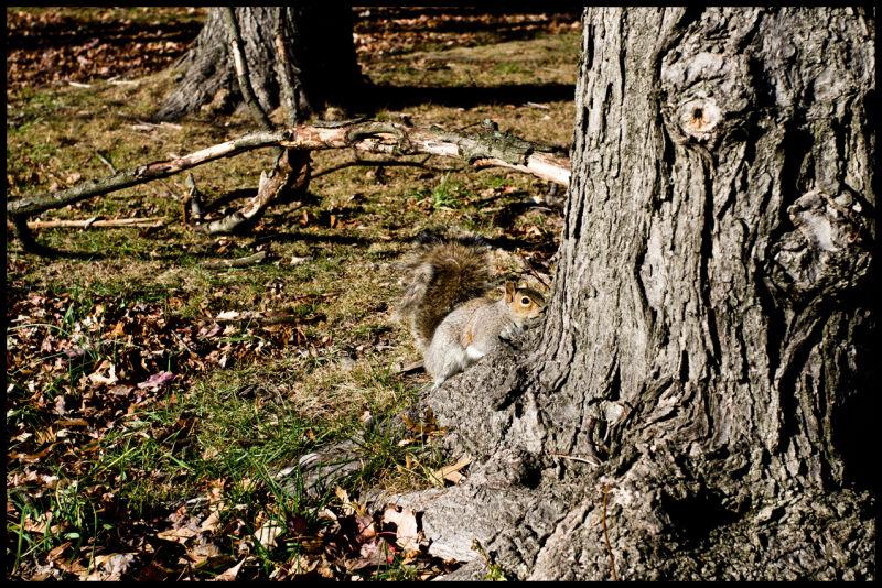 Squirrel, nature,tree,trees,grass,life,happy,stari