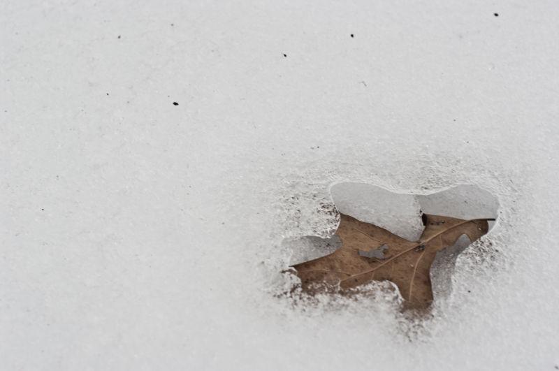 Leaf, Melted, Melt, Snow, Ice, Winter, odd, Strang