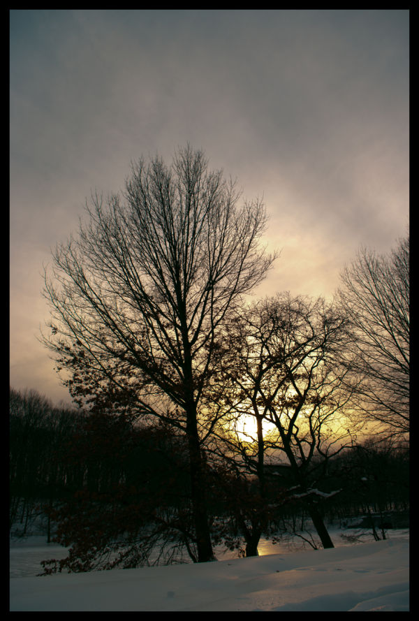 Tree, Lake, Nature, Sun, Set, Sunset, winter, cold