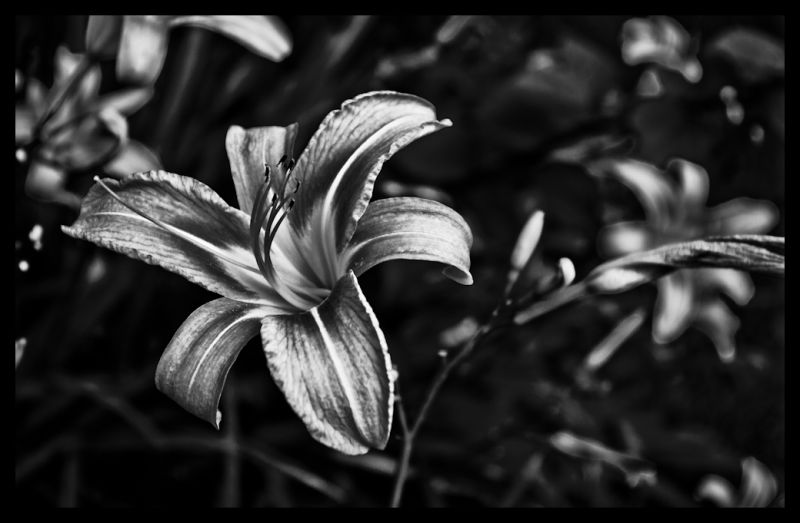 Flower, Life, death, fading, plants, nature, earth
