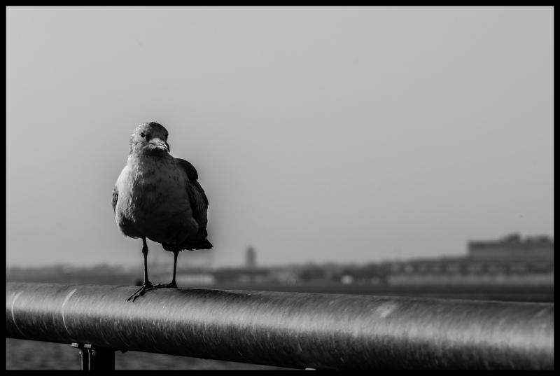 Bird, perch, bar, nature, sea, ocean, water, life,