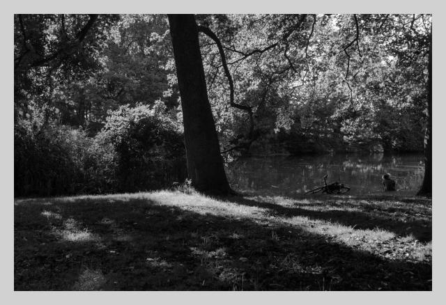 Tree, lake, lady, bike, nature, light, sun