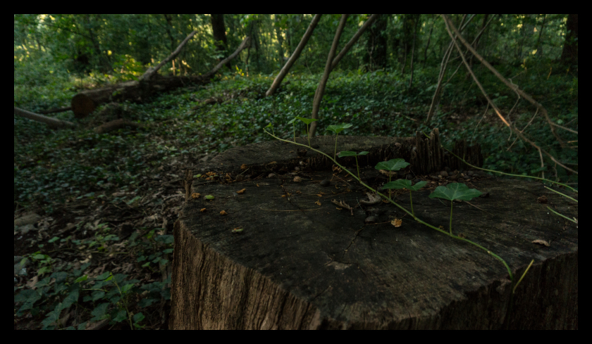 Tree, stump, nature, park, woods, nature, leaf, le