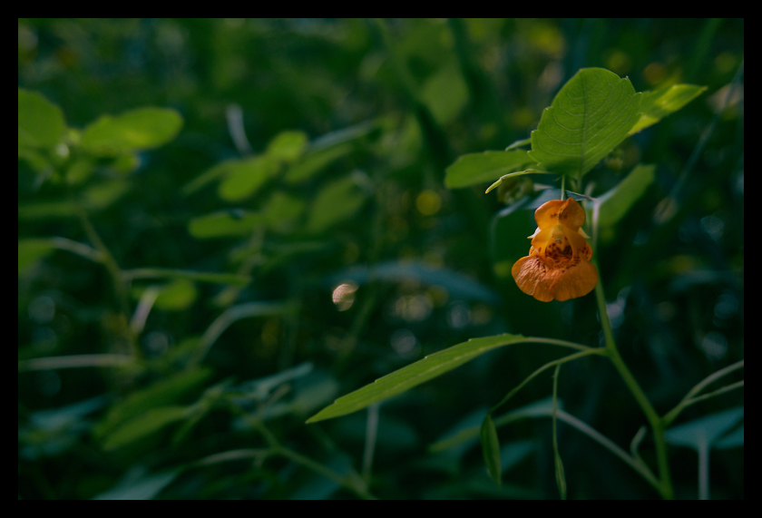 Flower, Alone, Nature, Woods, lonely
