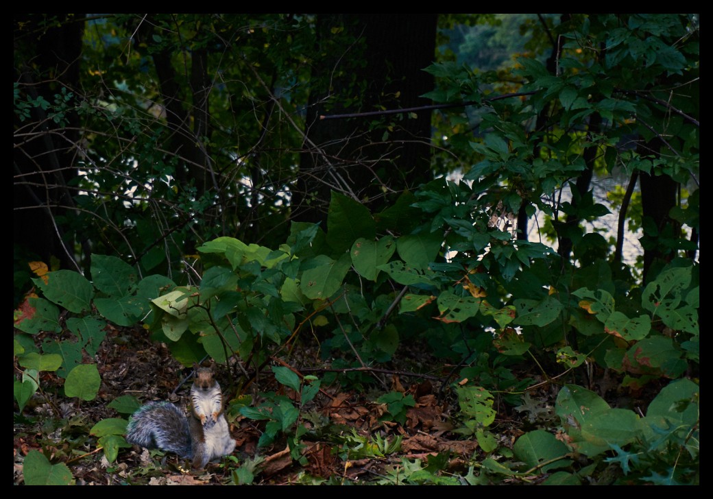 Squirrel, Spotted, Nature, trees, leaves, leaf.