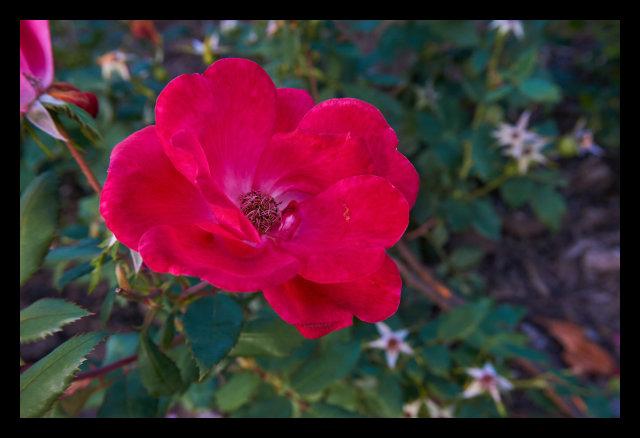 Flower, Nature, Macro, park, wild