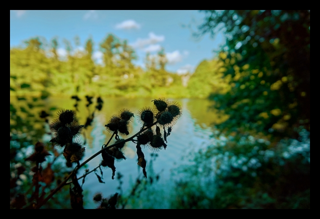Lake, Nature, Plants, Flowers, woods