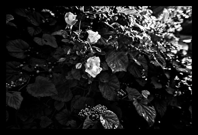 Flower, B+W, Nature, Sun, Light, Woods