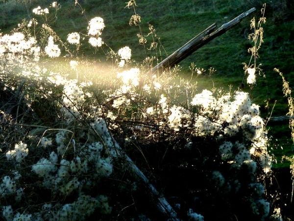 Lumières l'hiver