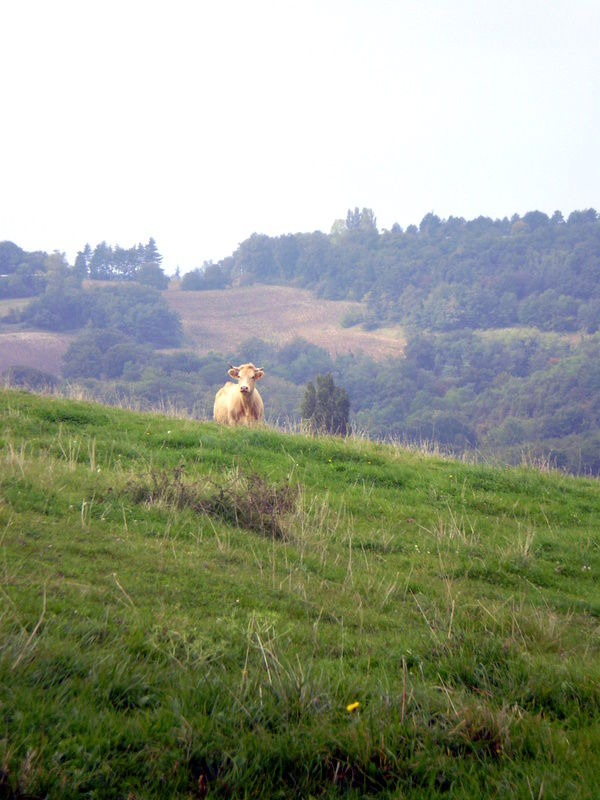 On the hills