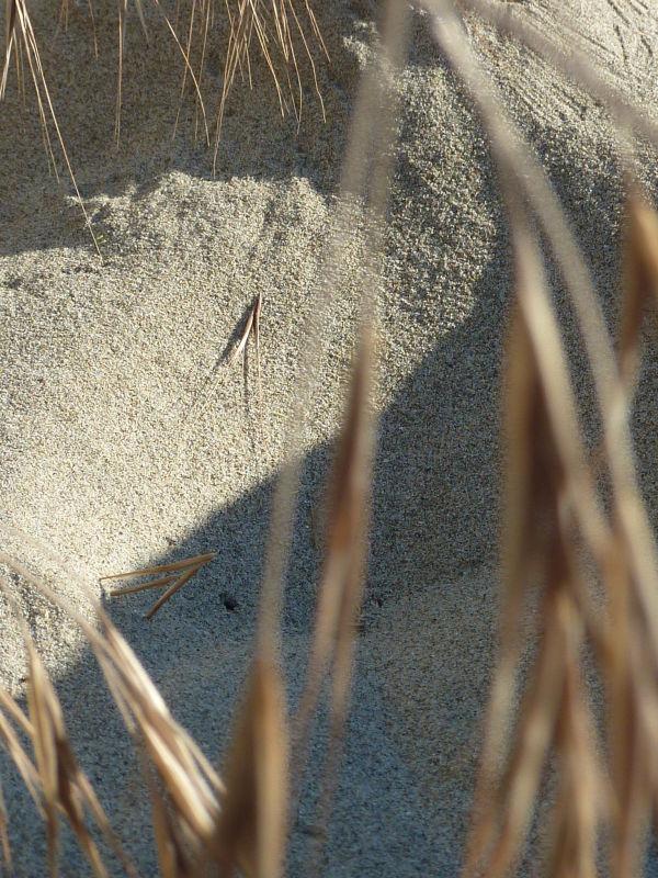 morning sand