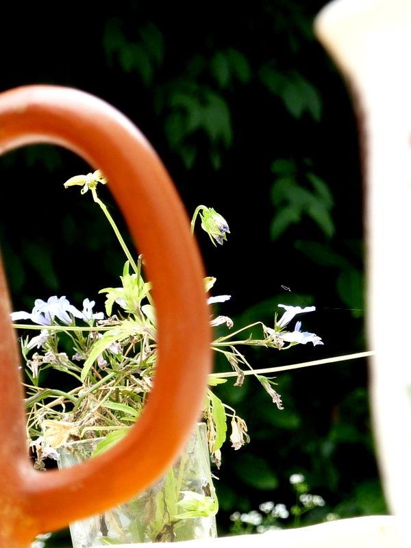 Teapot gardening