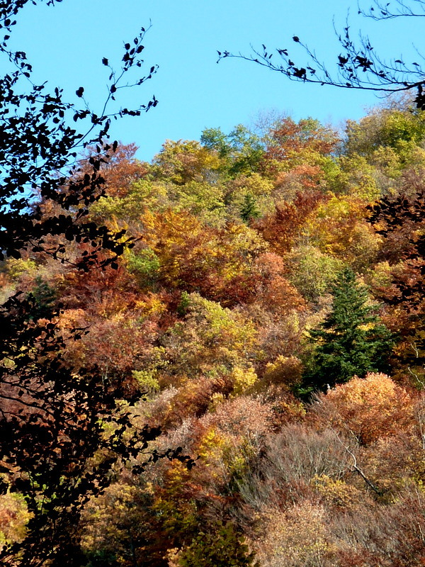 vercors d'automne