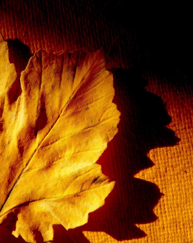 entre les feuilles