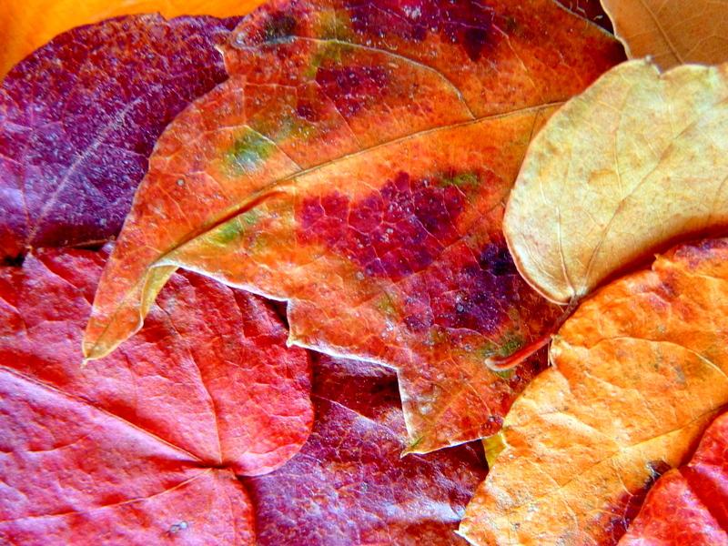 automne après