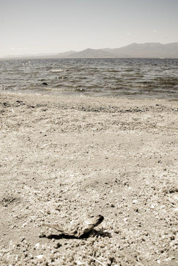 Salton Sea IX