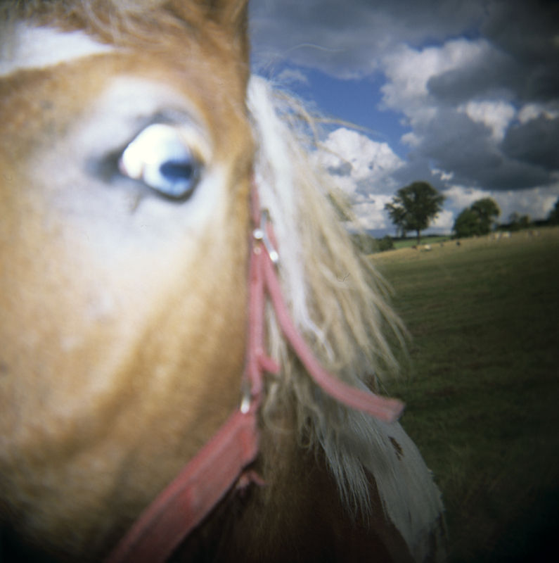 lomography of a horse in close-up