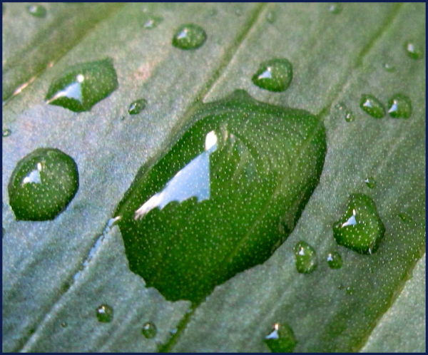 water droplet magnifies pores on leaf