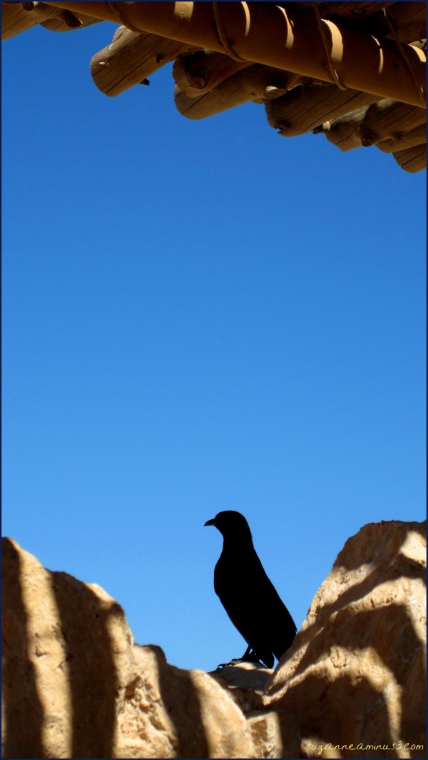 bird at Masada Israel