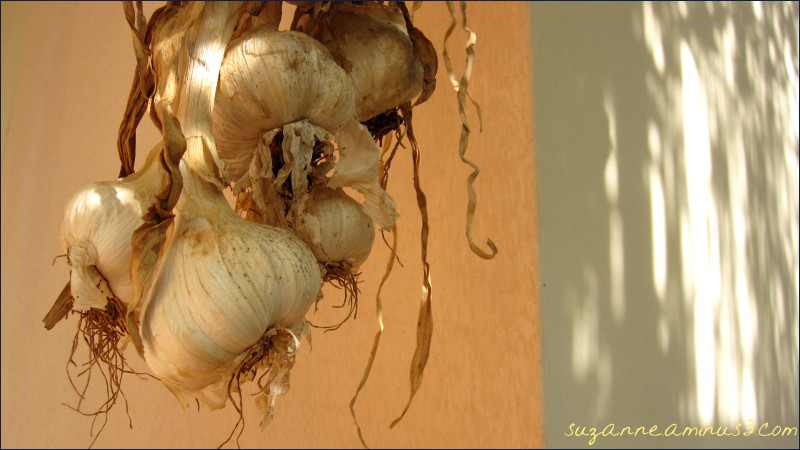hanging garlic