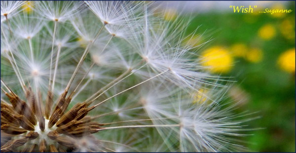 seed pod of a weed