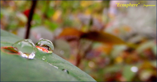 raindrop with reflections