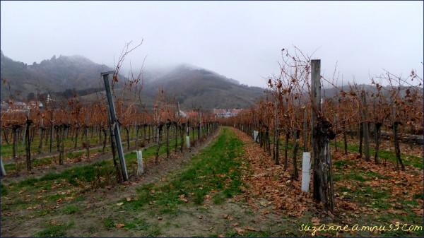 Durnstein, grapevines, winter, mountains