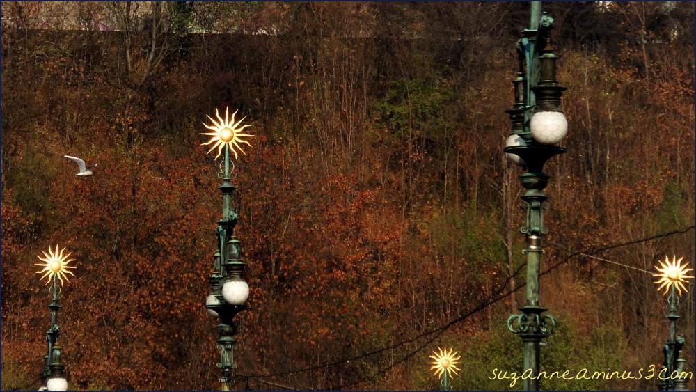 image, bridge,, lamps, suns, seagull, prague