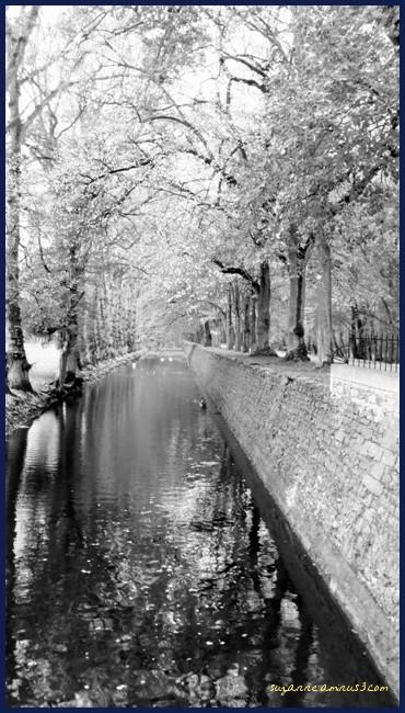 image, black & white, loire valley, water, autumn